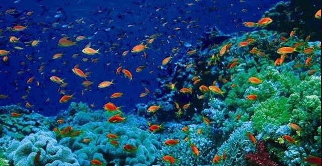 водоросли в подводном мире
